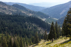 Hillsides with firs, spruces. Stock Photography