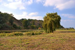 Hillsides and tree Royalty Free Stock Photo
