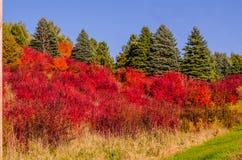 Hillsside der drastischen Farbe Stockfotos
