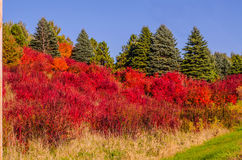Hillsside dramatyczny kolor zdjęcia stock