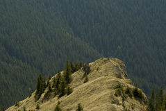 Hilltop. With deep forest background stock images