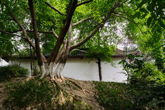 Hilltop aged tree before Chinese ancient building in sunny summe Stock Images