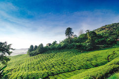 Hilltop Bungalow Surrounding By Tea Plantation With Sunny Day An Royalty Free Stock Images