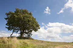 Hilltop tree Royalty Free Stock Photography