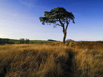 Hilltop Tree Stock Photography