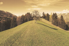 Hilltop tree. On a meadow royalty free stock photo