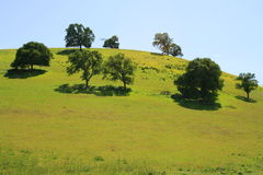 Hilltop With Trees. Hilltop with a group of trees over blue sky Stock Photo