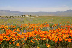 Hilltop View. Poppies with house on hill in distance Royalty Free Stock Photos