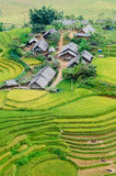 Hilltop village, Muong Hoa valley terraced fields, Sa Pa town, V Royalty Free Stock Photo