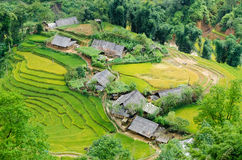 Hilltop village, Muong Hoa valley terraced fields, Sa Pa town Stock Photo
