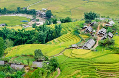 Hilltop village, Muong Hoa valley terraced fields, Sa Pa town Stock Images