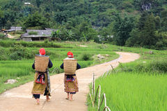 Hilltribe women near paddy fields walking up Stock Photography
