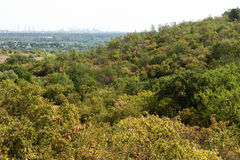 Nature, hills, vegetation, city Royalty Free Stock Photos
