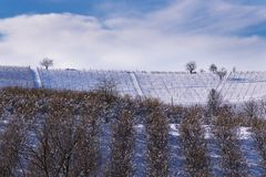 Snowy hilly landscape among vineyards and hazel groves royalty free stock photos