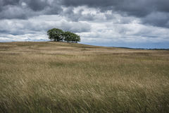 Hilly field. Undulating landscape in Mecklenburg-Vorpommern with cloudy sky Royalty Free Stock Photography
