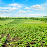 Hilly green field and blue sky. Stock Images