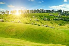 Hilly green fields and the sun on a blue sky. Agricultural lands. Hilly green fields and the sun on a blue sky.Spring agricultural landscape Royalty Free Stock Photo