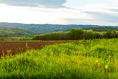 Hilly landscape. Arable land in a hilly landscape at morning sunrise with moody sky Royalty Free Stock Image