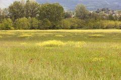 Hilly landscape Stock Image