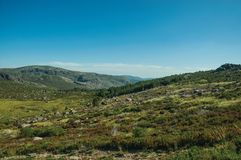 Hilly landscape covered by green fields and rocks. Countryside hilly landscape covered by green fields with bushes and rocks, in a sunny day at the Serra da royalty free stock photography