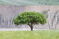 The hilly landscape with a lone tree in the Fan Mountains. Tajik Stock Photo