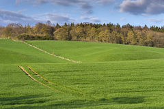 Hilly landscape in Lower Saxony Royalty Free Stock Images