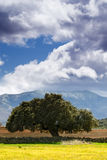 Hilly landscape with an oak in foreground Stock Image