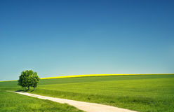 Hilly landscape in the summer royalty free stock images