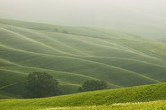 Hilly landscape of Tuscany in the Mist. Rural countryside landscape in Tuscany region of Italy Stock Photography