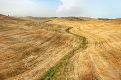 Hilly landscape of Tuscany stock photo
