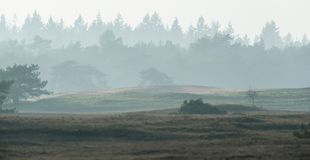 Free Hilly Misty Landscape With Fir Forest On Horizon. Royalty Free Stock Photos - 108935338