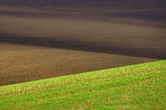 Hilly plowed field and seedlings. Stock Photos
