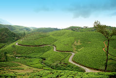 A hilly road. In the middle of a tea estate Royalty Free Stock Images