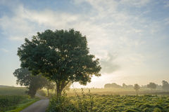 Hilly rural landscape in sunlight Royalty Free Stock Photo