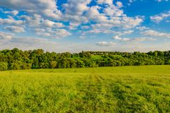 Hill meadow sky. Hilly terrain in a meadow village with green grass pasture against a blue sky with white clouds Royalty Free Stock Image