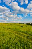 Hill meadow sky. Hilly terrain in a meadow village with green grass pasture against a blue sky with white clouds Stock Images