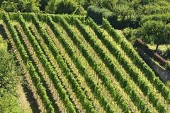 Hilly vineyard #5, Stuttgart Royalty Free Stock Photos