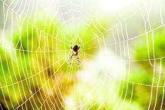 Hilo de araña de la araña con algunas gotitas de agua temprano por la mañana Fotos de archivo libres de regalías