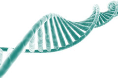 Hilo de la DNA Imágenes de archivo libres de regalías