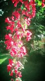 Hilo de las flores de d Imagen de archivo libre de regalías
