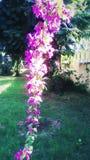 Hilo de las flores rosadas Imagen de archivo libre de regalías
