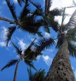 Hilo, Hawaii Stockbild