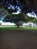 Hilo, Hawaii Royalty Free Stock Images