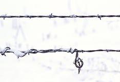 Hilos de la cerca del alambre de púas en nieve Imagenes de archivo