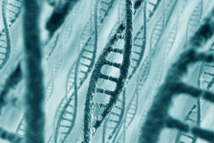 Hilos de la DNA Imágenes de archivo libres de regalías