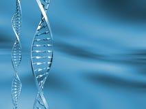 Hilos de la DNA Fotografía de archivo