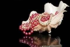 Hilos de perlas en un shell Fotos de archivo libres de regalías