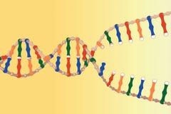Hilos separados de la DNA Fotos de archivo
