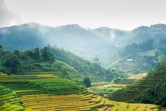 Hils of rice terraced field with mountains and clouds at backgro Stock Photo