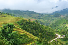 Hils of rice terraced field with mountains and clouds at background Stock Photos